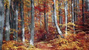 【秋キャンプ】紅葉が美しいキャンプ場 6選 【関東編】